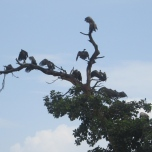 Vultures on the way