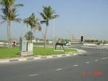 Dubai Dry Docks